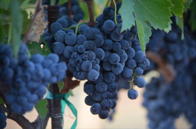 Perissos Winery